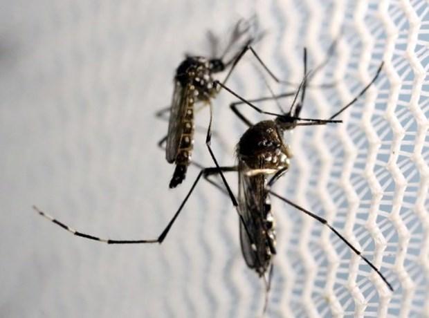 Realiza Tailandia acciones contra la expansion de la fiebre Chikungunya hinh anh 1