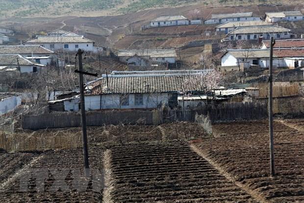 Vietnam entrega cinco mil toneladas de arroz a Corea del Norte hinh anh 1