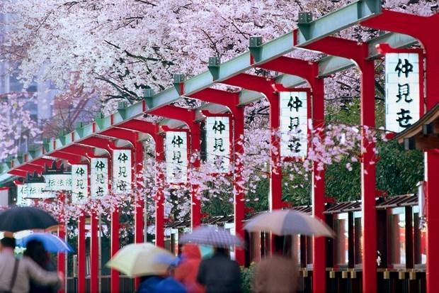 Crecio el turismo vietnamita a Japon mas de un 40 por ciento en mayo hinh anh 1