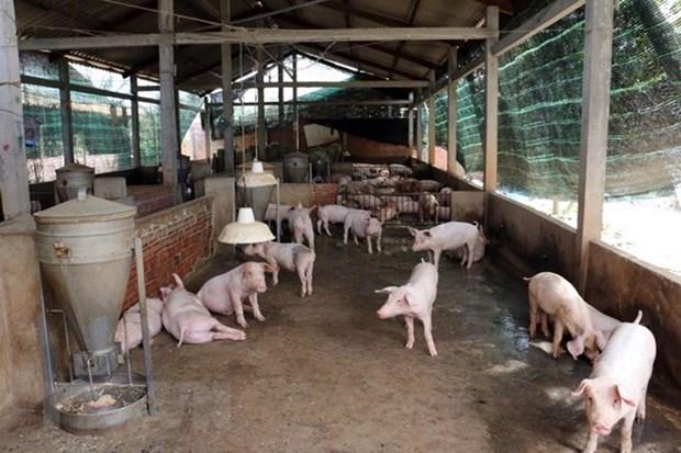 Tailandia prohibe importacion de cerdos de Laos por temor a la fiebre porcina hinh anh 1