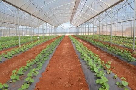 Impulsa ciudad vietnamita la cooperacion agricola con Nueva Zelanda hinh anh 1