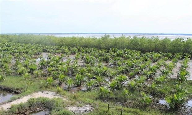 Vietnam impulsa acciones para proteger bosques costeros hinh anh 1