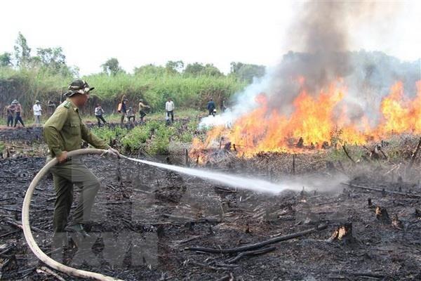 Insta premier vietnamita a reforzar medidas preventivas contra incendios forestales hinh anh 1