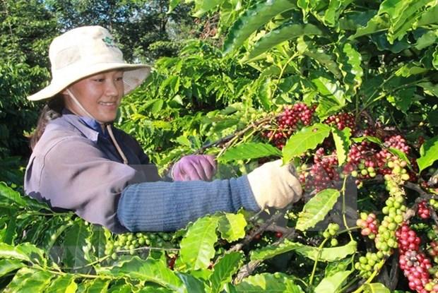 Valoran que el EVFTA abre puertas de Europa a productos agricolas de Vietnam hinh anh 1