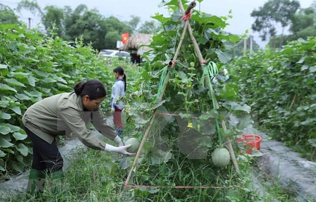 Resaltan en Vietnam eficiente uso de prestamos extranjeros para desarrollo agricola hinh anh 1
