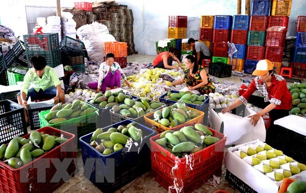 Ingresa Vietnam en seis meses monto multimillonario por exportaciones hortofruticolas hinh anh 1