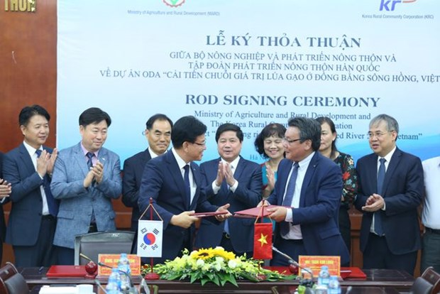 Invierte Corea del Sur en Vietnam para mejorar la cadena de valor del arroz hinh anh 1