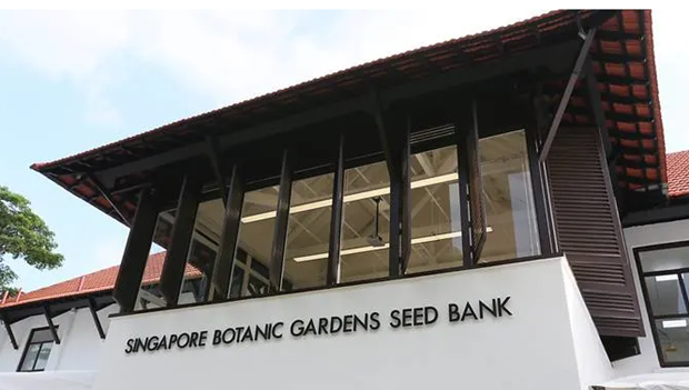 Singapur inaugura su primer banco de semillas hinh anh 1