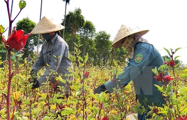 Reconocen avances de Vietnam en cumplimiento de objetivos de desarrollo sostenible hinh anh 1