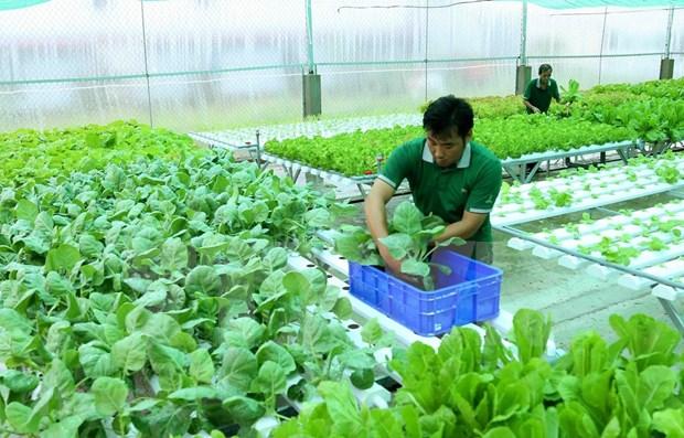 Planean establecer estandares comunes para productos organicos en ASEAN hinh anh 1