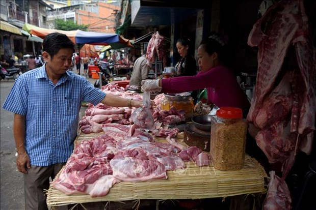 Avanza en Camboya epidemia de peste porcina africana hinh anh 1