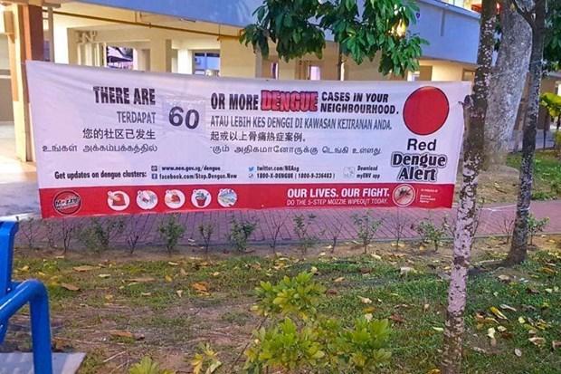Alcanzan nivel record los casos semanales de dengue en Singapur hinh anh 1