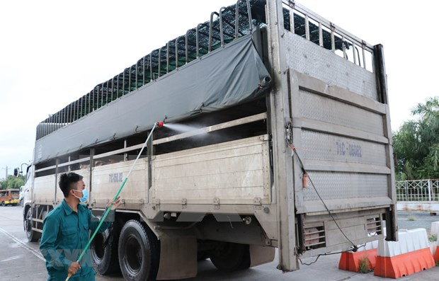 Vietnam y Camboya coordinan en la prevencion contra la peste porcina africana hinh anh 1