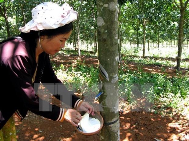 Aumenta valor de las exportaciones de caucho vietnamita en primer semestre de 2019 hinh anh 1