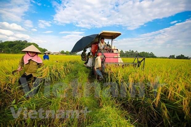 Proyecta Vietnam lograr una agricultura mas eficiente y sostenible hinh anh 1