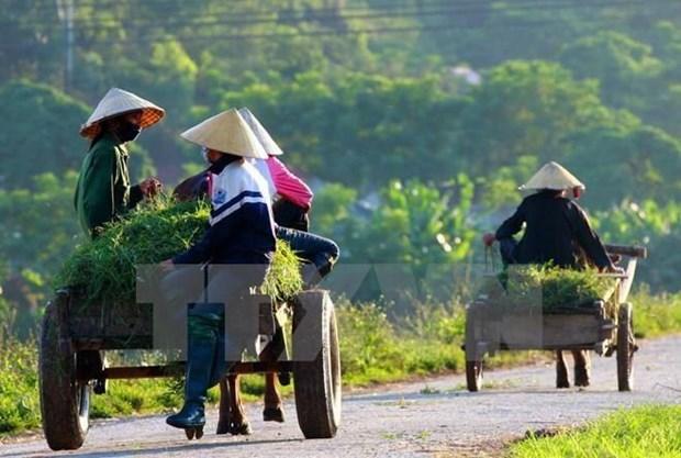Reportan en Vietnam avances en la modernizacion de zonas rurales hinh anh 1