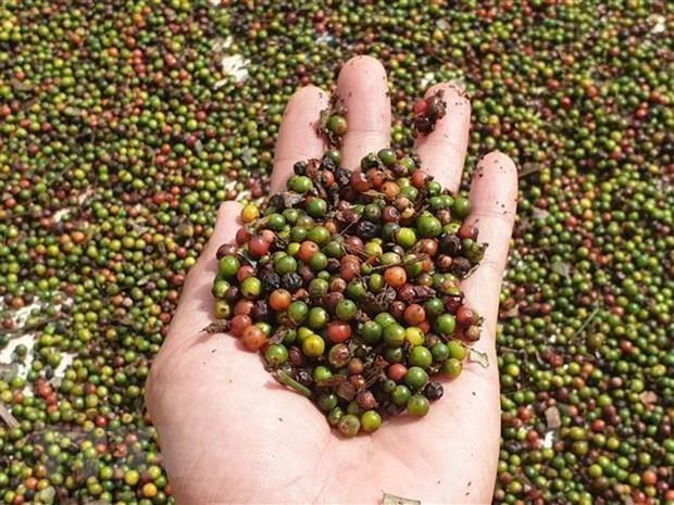 TLC Vietnam-UE, oportunidades para exportaciones de productos agricolas y acuaticos hinh anh 1