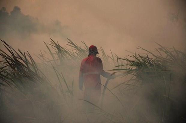 Exige presidente indonesio mayores esfuerzos para acabar con incendios forestales en el pais hinh anh 1