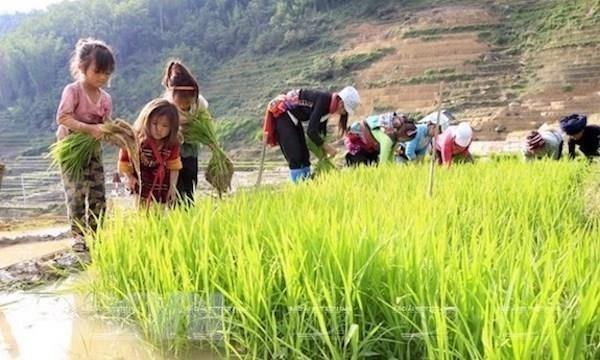 Debaten en Vietnam medidas para acabar con el trabajo infantil en cadenas de suministro hinh anh 1