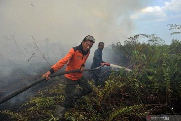 Detectan casi 19 mil focos de incendio en Sudeste Asiatico y Papua Nueva Guinea hinh anh 1