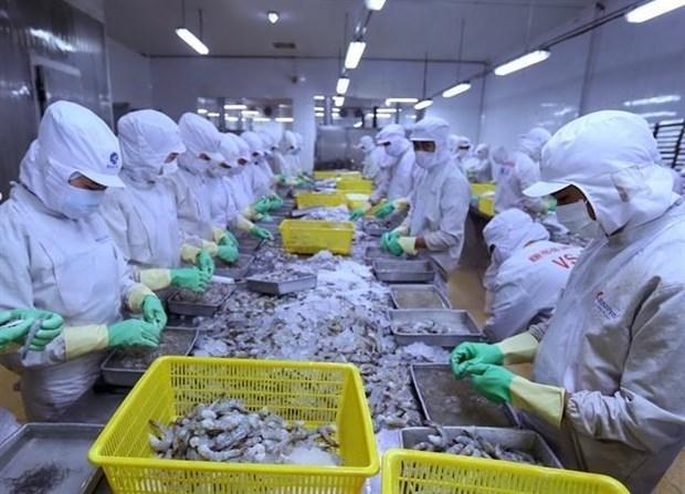 Preven aumento en exportaciones del camaron vietnamita en segundo semestre del ano hinh anh 1