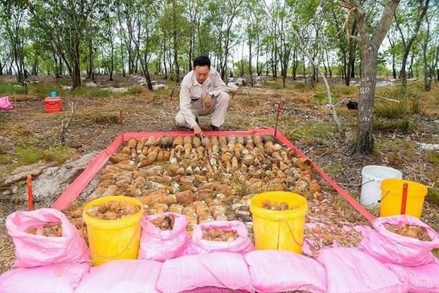Descubren dos bovedas con mas de mil materiales explosivos en provincia vietnamita de Quang Tri hinh anh 1