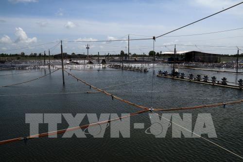 Recomiendan usar energia renovable en cria de camaron en Vietnam hinh anh 1