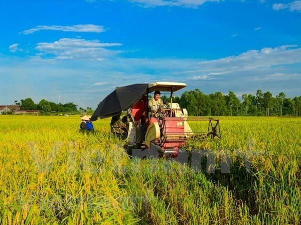 Comparten en Vietnam experiencias sobre enfermedad bacteriana de hojas del arroz hinh anh 1