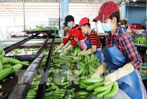 Apunta Vietnam a obtener 4,2 mil millones de dolares por exportaciones hortofruticolas en 2019 hinh anh 1