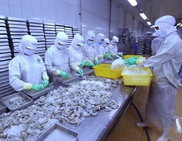 Se recupera exportacion de camarones de Vietnam a China hinh anh 1