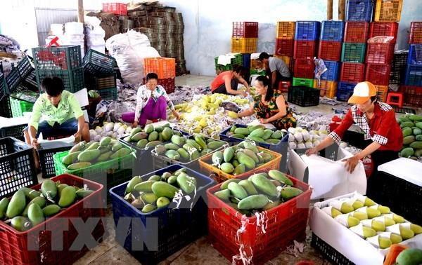 Cayen exportaciones de frutas y verduras de Vietnam a China hinh anh 1
