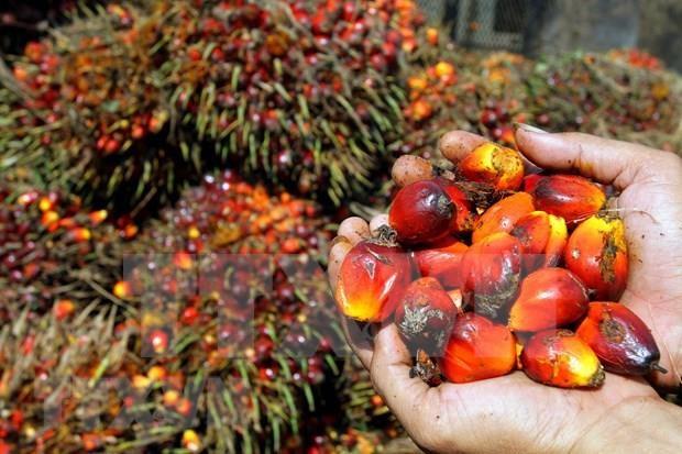 Protege Indonesia produccion del aceite de palma hinh anh 1