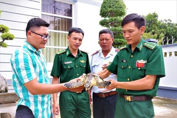 Liberan rara tortuga marina en la naturaleza hinh anh 1