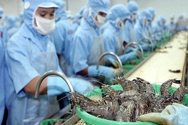 Exportadores de camarones vietnamitas gozan de impuesto cero a Estados Unidos hinh anh 1