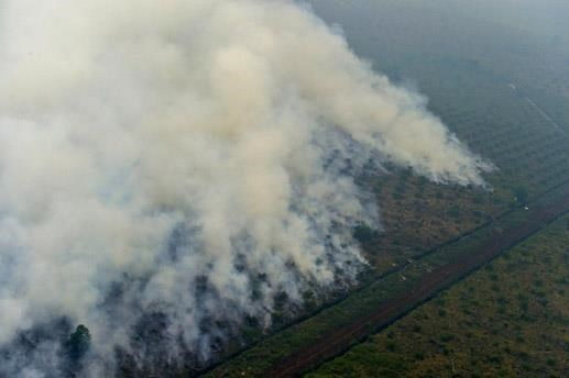 Indonesia refuerza lucha contra incendios forestales hinh anh 1