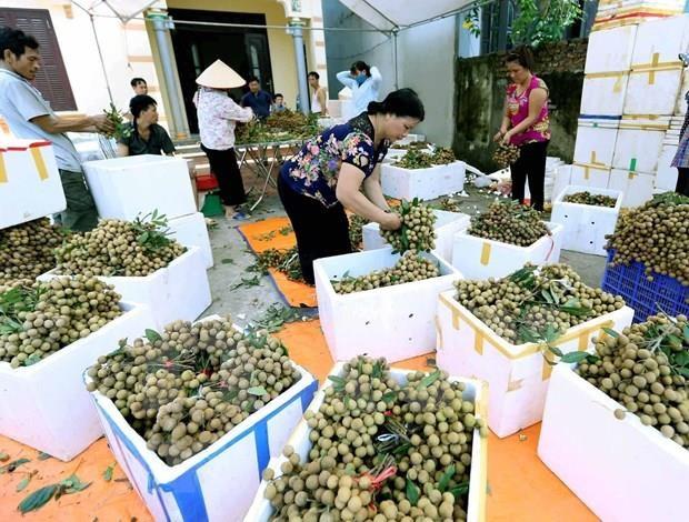 Impulsa Vietnam exportaciones de longan a Australia hinh anh 1