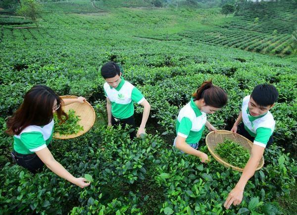 Comunidad empresarial de Vietnam busca encaminarse hacia desarrollo sostenible hinh anh 1