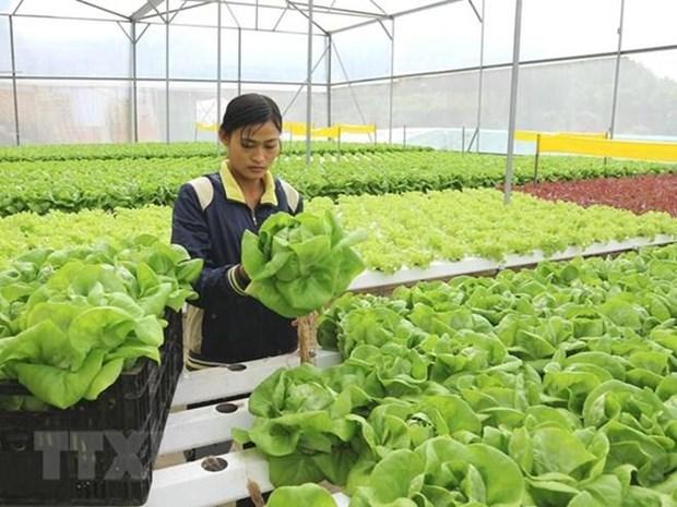 Proyecta Ciudad Ho Chi Minh impulsar cooperacion con Australia en agricultura de alta tecnologia hinh anh 1