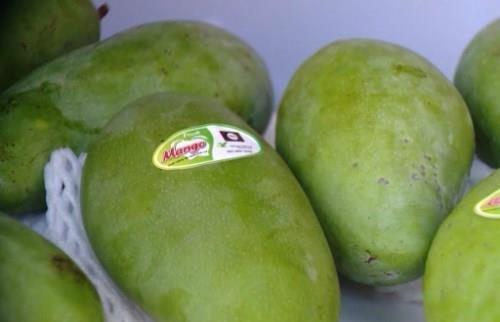 Conquista mango vietnamita mercado de Chile hinh anh 1