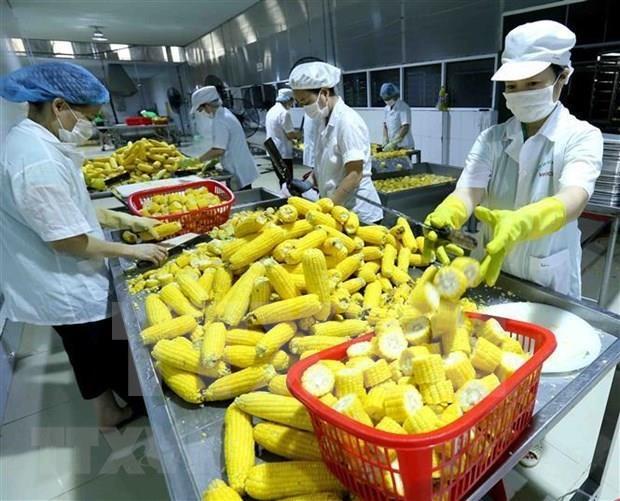 Promovera el TLC con la UE exportaciones agricolas de Vietnam hinh anh 2