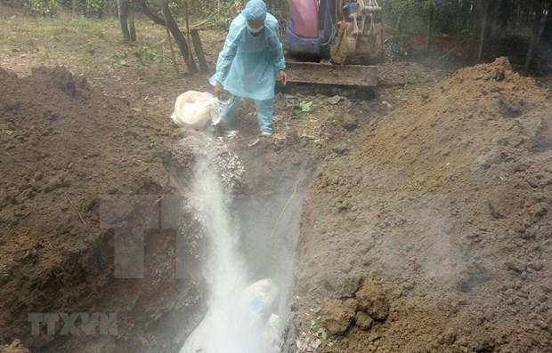 Detectan por primera vez peste porcina africana en provincia vietnamita de Ninh Thuan hinh anh 1