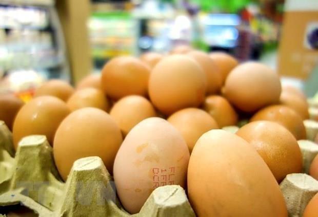 Eliminan Indonesia millones de huevos para apuntalar los precios del pollo hinh anh 1