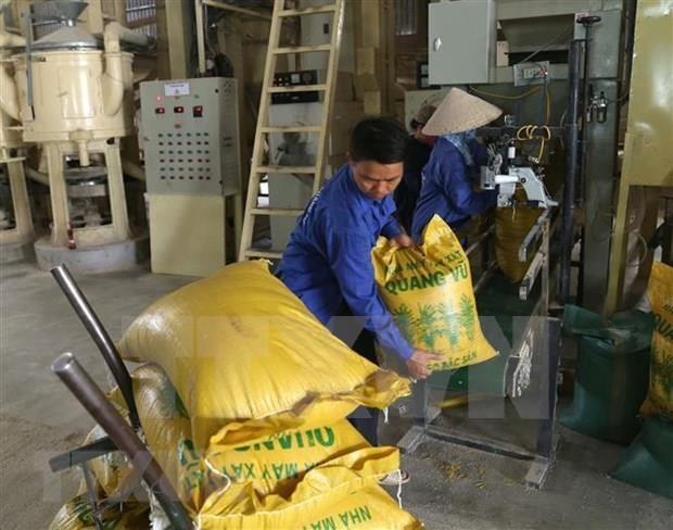 Cae valor de las exportaciones de arroz de Vietnam hinh anh 1
