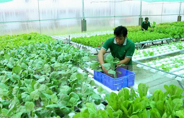 Invierte Vietnam mas de 1,5 mil millones de dolares para desarrollar agricultura organica hinh anh 1