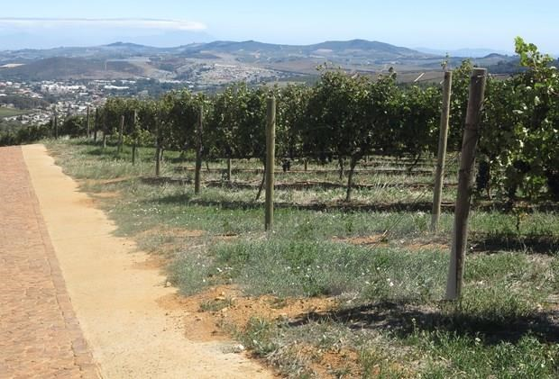 Exportara Sudafrica uva fresca a Vietnam hinh anh 1
