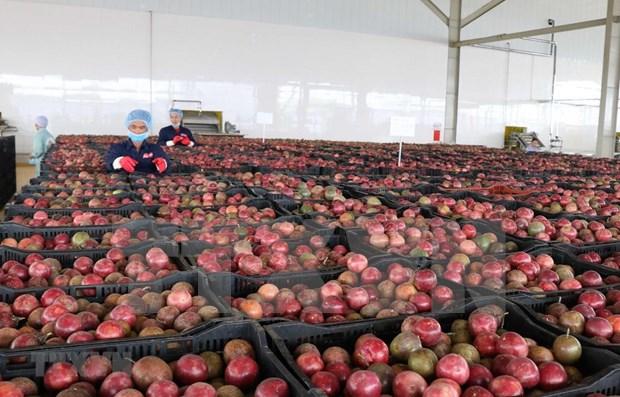 Entra en servicio en Vietnam importante centro procesador de productos agricolas hinh anh 1