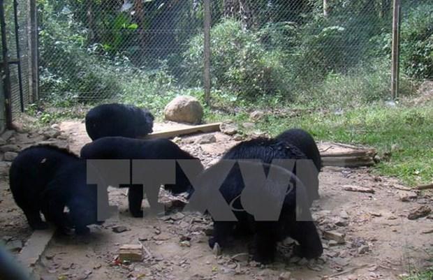 Promueven en Vietnam proteccion de especies en peligro de extincion hinh anh 1
