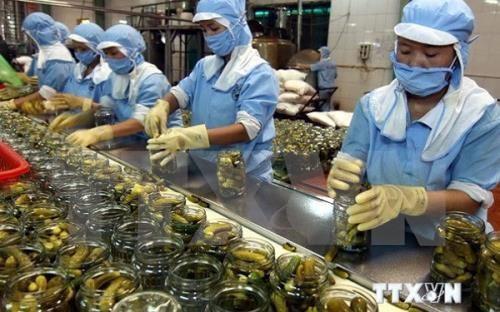 Exportaciones de frutas y verduras de Vietnam caen un 5,8 por ciento en ocho meses hinh anh 1