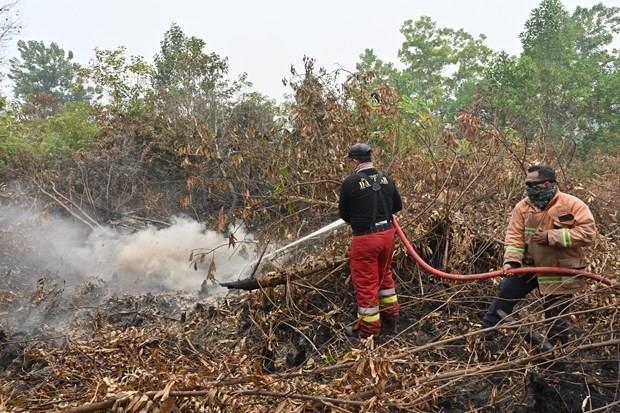 Indonesia cierre aeropuerto y escuelas debido a incendios forestales hinh anh 1