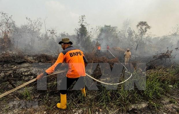 Impide densa niebla causada por incendios el aterrizaje de aviones en Indonesia hinh anh 1